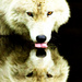 Wolf Icon - yorkshire_rose icon