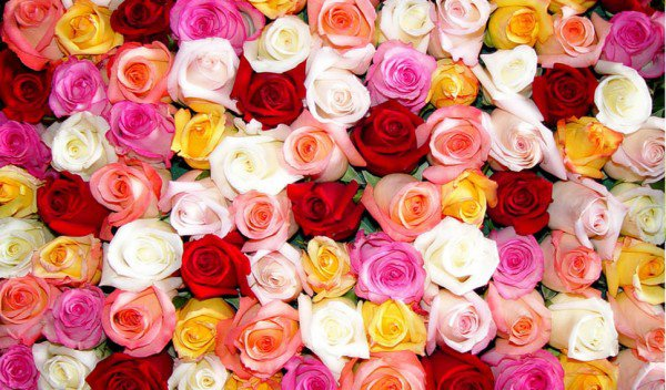 colorful Rosen Wand