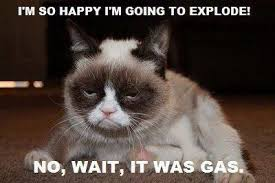 Grumpy Cat Images Gumpy Wallpaper And Background Photos