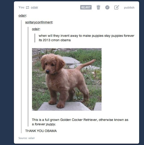 X Menobsessed26 Imagens Tumblr Perguntas Cachorro Filhote De