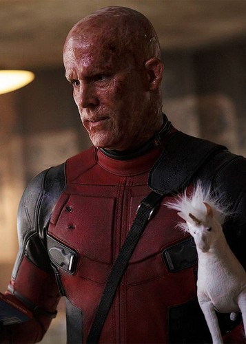Deadpool (2016) wallpaper probably containing a chihuahua called Deadpool