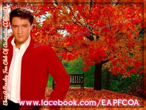 Elvis Autumn