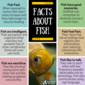 Facts About ikan
