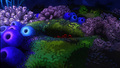 Finding Nemo Wallpaper - finding-nemo wallpaper