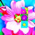 fleur collage