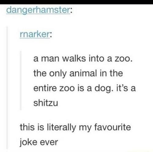 funny jokes wallpaper called Funny Jokes