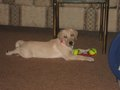 My Crystal as a Puppy - dogs photo