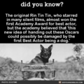 Rin Tin Tin - dogs fan art
