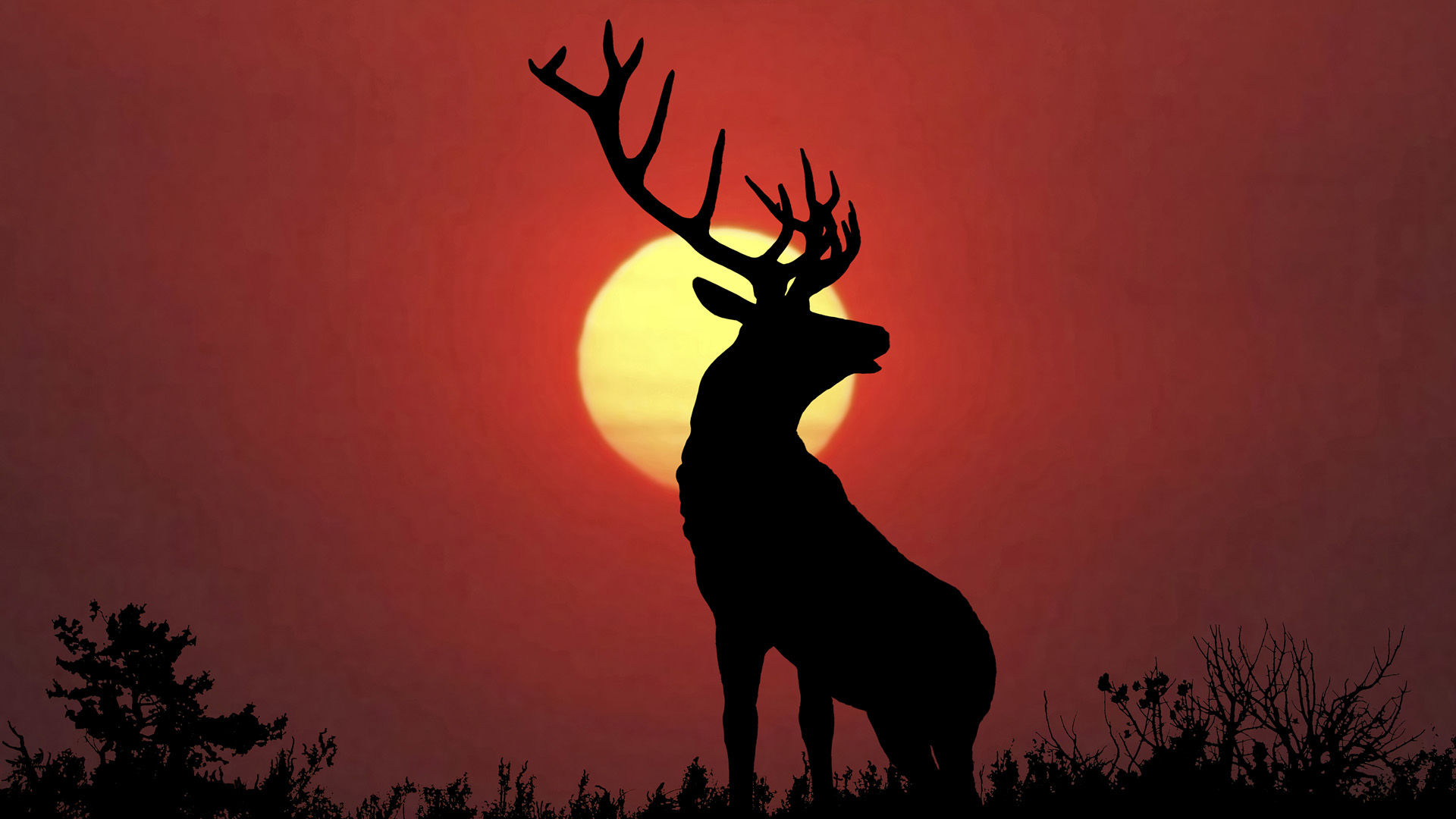 deer images stag hd wallpaper and background photos 39382992