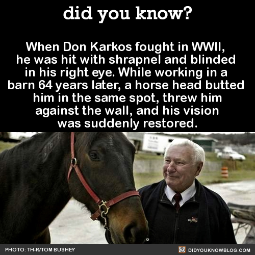 The Horse That Cured Blindness