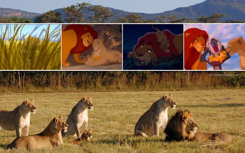 The Lion King wallpaper titled The Lion King