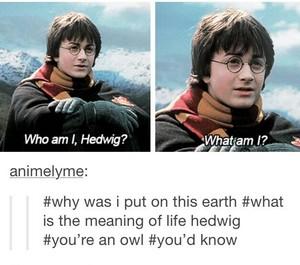 Who Am I Hedwig