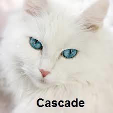 boy cascade