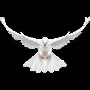 голубь 13