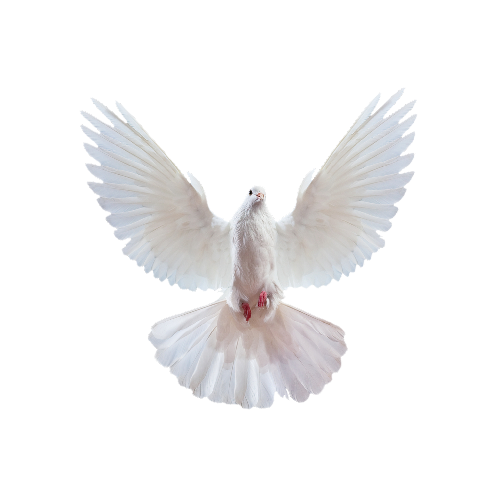 голубь 17