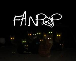 fanpop12
