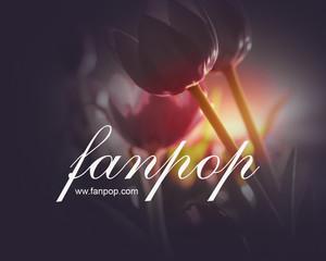 fanpop14