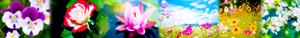 꽃 banner for Joy