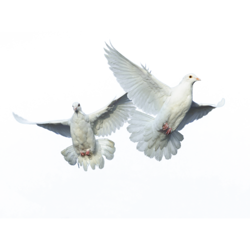 Disney Princess achtergrond called flying birds 3