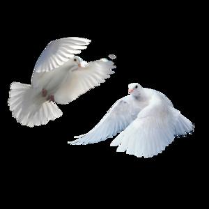 flying birds 5
