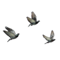 flying birds 8