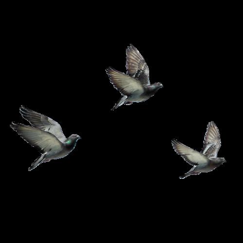 Диснеевские принцессы Обои possibly containing a mockingbird, a wren, and a глотать, ласточка titled flying birds 8