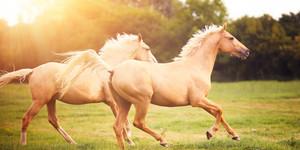 o HORSE Facebook