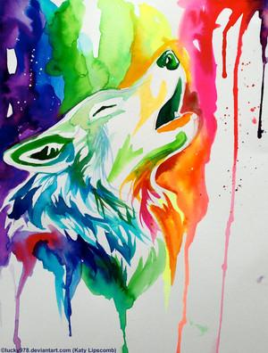 pelangi, rainbow serigala, wolf