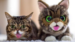 Animals - Lil Bub