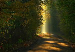 Autumn Sunshine autumn 21789642 500 345