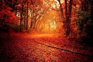 Autumn autumn 33127267 500 333