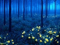 Black forest, Germany (at night) - earth-planet photo