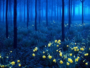 Black forest, Germany (at night)
