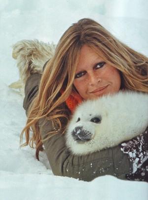 Brigitte et les animaux