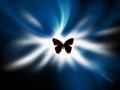 Butterfly Silhouette - butterflies wallpaper