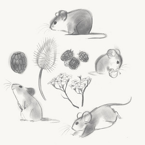 Cute mice sketches