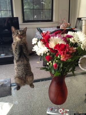 Flowers - Cat In Love