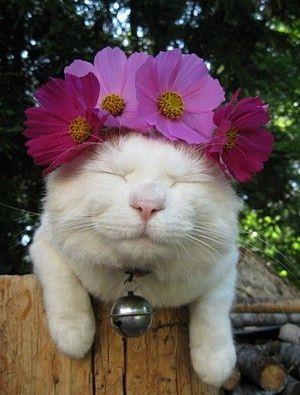 Flowers - Cat