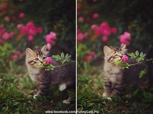 Flowers - Kitten