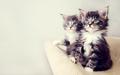 Fluffy Kittens - cats wallpaper