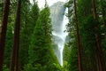 Forest and waterfall
