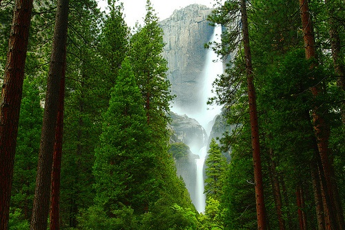 Earth planet پیپر وال with a ponderosa, a douglas fir, and a sitka سپروس, تیکھا called Forest and waterfall
