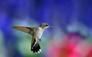 벌새, 벌 새