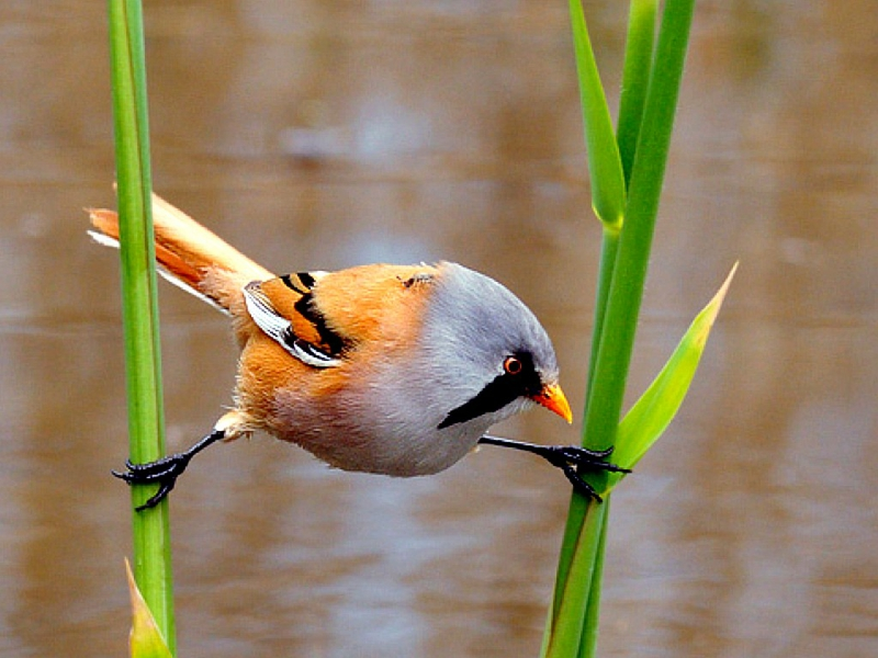 Animals Images Little Bird Hd Wallpaper And Background Photos 39464223