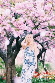 Lou under the cereza, cerezo blossom