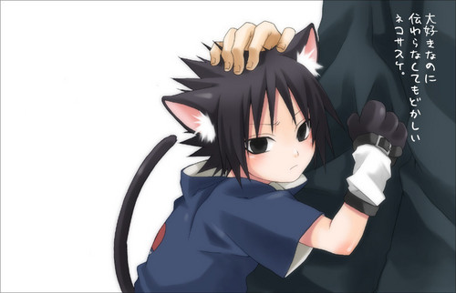 Sasuke Uchiha wallpaper called Neko Sasuke