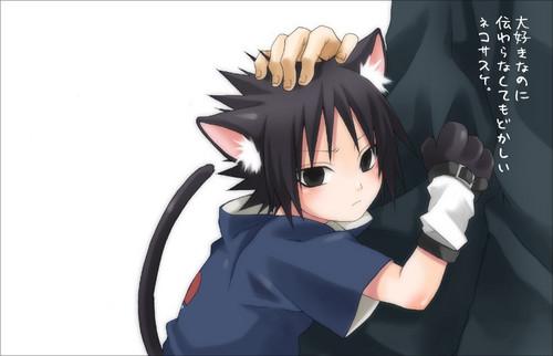 Sasuke Ichiwa fond d'écran called Neko Sasuke
