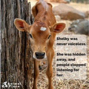 Never Voiceless