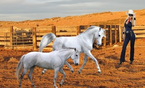 The Lone Rider's corcel, steed Storm Racer is trying to gain his attention to a White Mare