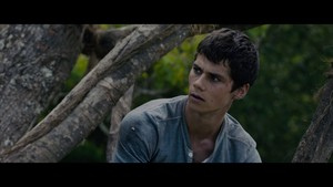 The Maze Runner Screencaps